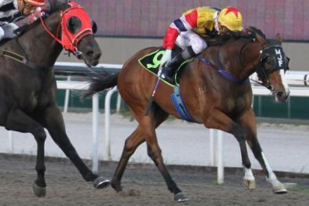 Stock Broker out to pay dividends in last race