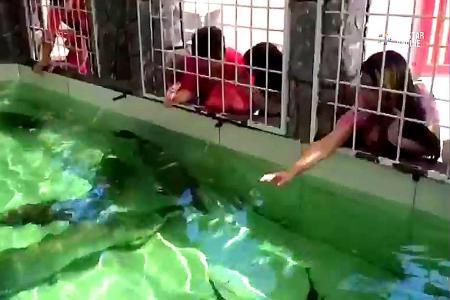 Big fish proving to be a big draw at Penang temple