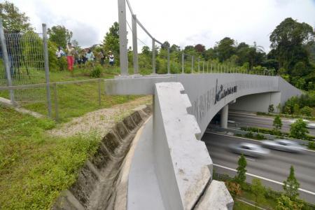 NParks: No more guided walks on wildlife bridge