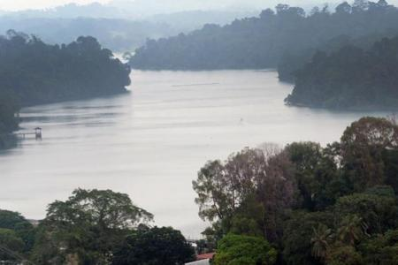 Jogger dies after heart attack at MacRitchie