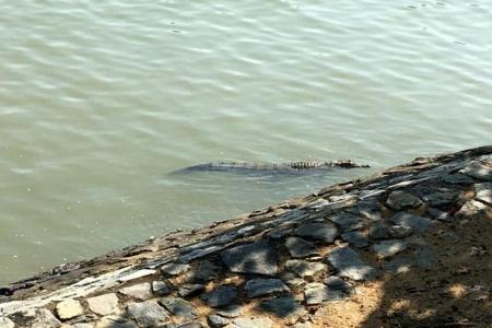 Warning signs put up after crocodile spotted at Changi Beach Park