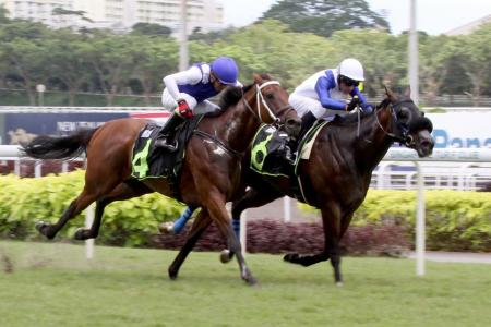Saimee get a winner and new owner lands quinella
