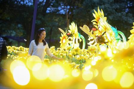 Lanterns to light up Gardens by the Bay