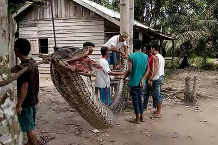 Giant python nearly severs man's arm
