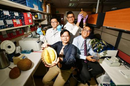 Scientists unearth genetic map of durian, set path for new species