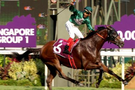 Gilt Complex springs $222 upset in Raffles Cup