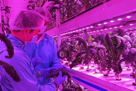 S'pore farms team up to raise standards