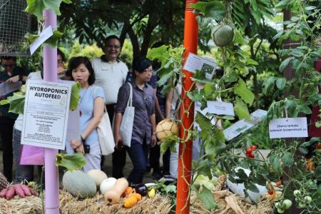 NParks' garden plots a big hit with Singaporeans