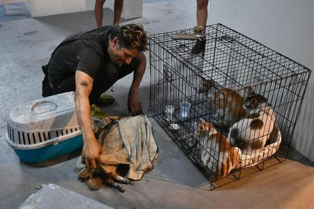 Man grieves over death of pet