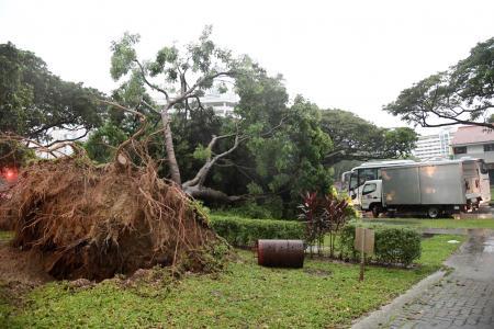 Foul weather fells trees