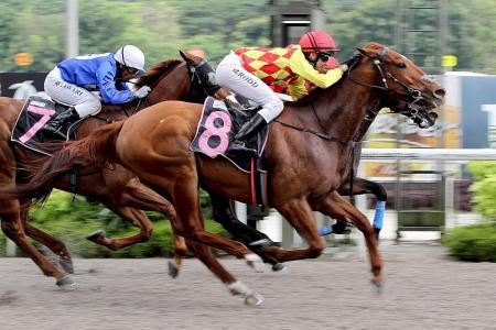 Golden Sword slays Kranji's equine giant