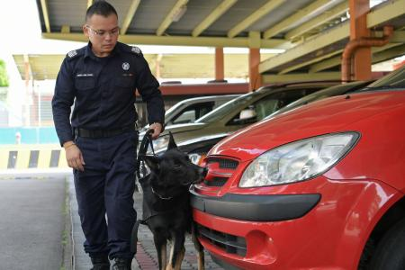 Dogs to help in security checks