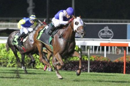 Al-Arabiya horses gear up for 2018