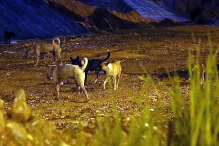 AVA to introduce sterilisation programme for stray dogs