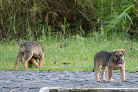 Animal welfare groups embrace AVA's new move