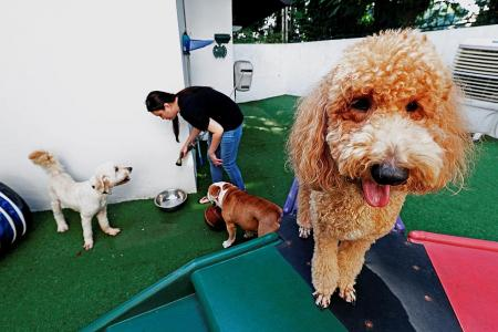 Dog owners can apply for multi-year licences from March