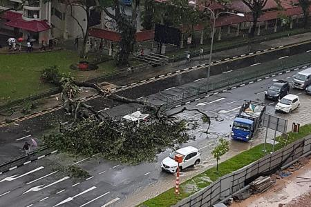 Two hurt as tree falls on lorry