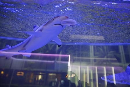 Concern over juvenile sharks turns into ugly argument
