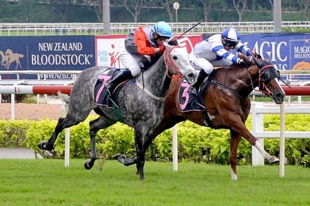 Amistad gives trainer Young his first winner