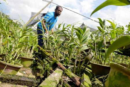 Some plant nurseries damaged by bad weather