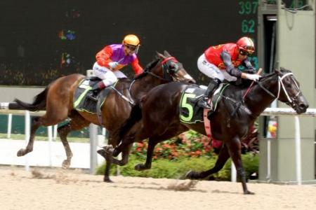 Nowyousee the G3 3YO Sprint beckons