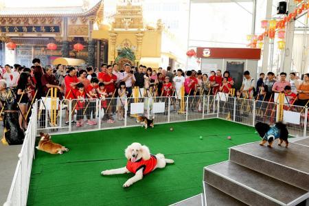 Dogs greet members of the public at Loyang Tua Pek Kong temple