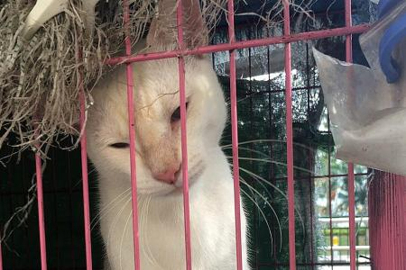 Nineteen cats live in cages outside Queenstown flat