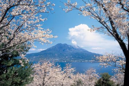 Top sakura spots across Japan