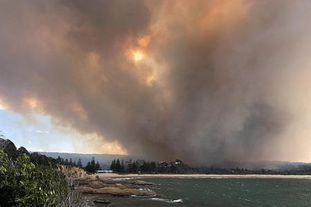 Australia bush fires destroy homes, kill cattle