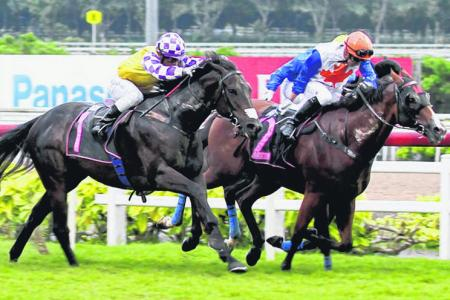 Raise No Doubt (No. 2) fending off Viviano (No. 1) to post a $323 upset in Race 9 at Kranji on Sunday