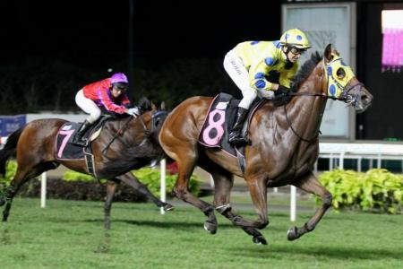 Jockey Michael Rodd steering Mr Dujardin (No. 8) to an emphatic victory on Friday night.