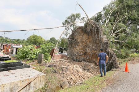 Fallen trees damage graves at Choa Chu Kang Cemetery