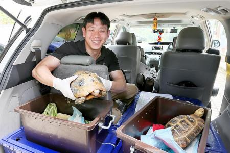 Acres returns six rescued reptiles back to M'sia