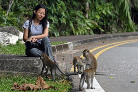 Childhood pet leads to primatology calling