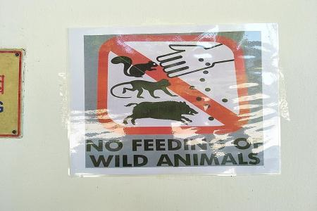 Most Singaporeans support ban on feeding of wild animals