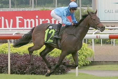 Top Knight winning second-up with jockey Glen Boss astride in Race 2 at Kranji yesterday.