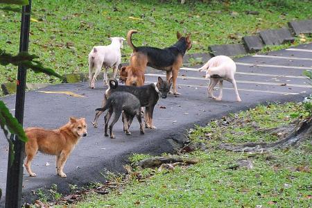 SPCA to start new scheme to sterilise, manage strays