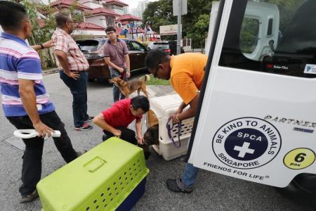 AVA arrests  Platinium Dogs Club operator