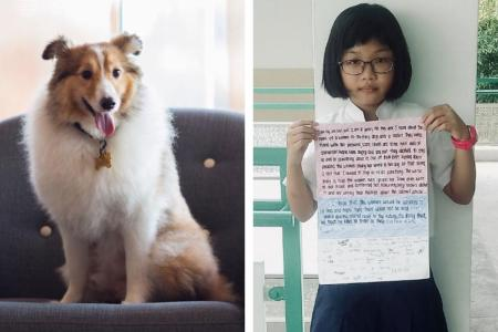 More than 150 searched for 'missing' dog that had already died