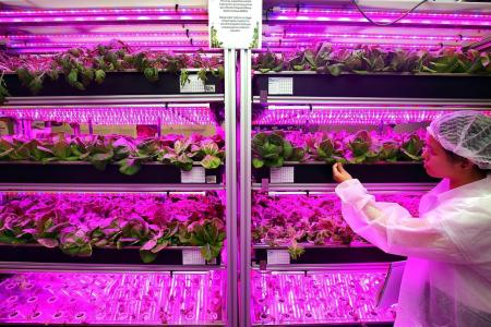 RP invests in urban farming with new diploma, lab
