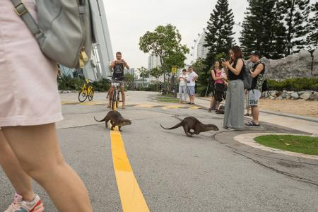 Singapore otters a hit overseas