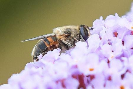 A third of all insect species face extinction: Study