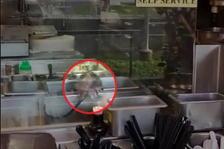 NEA probing after rat seen in Toa Payoh eatery