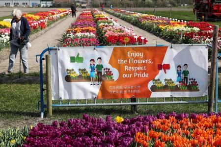 Dutch tulip forecast: Brilliant, with a chance of ugly tourists