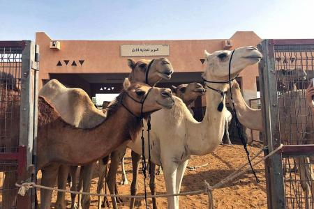 Abu Dhabi, Al Ain cater to animal lovers and the adventurous