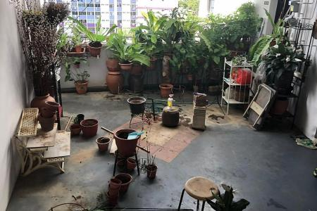 Over 30 plants removed from Pasir Ris corridor after complaints