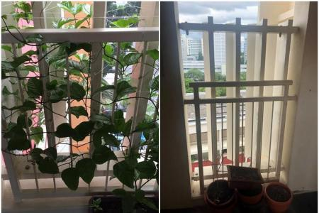 HDB residents ask 'are you going to stamp out creativity?'