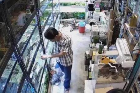 Customer allegedly poisons aquarium fish