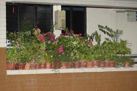 Jurong West resident takes down potted plants from corridor ledge