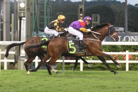 Escape Club the one to watch in Race 5